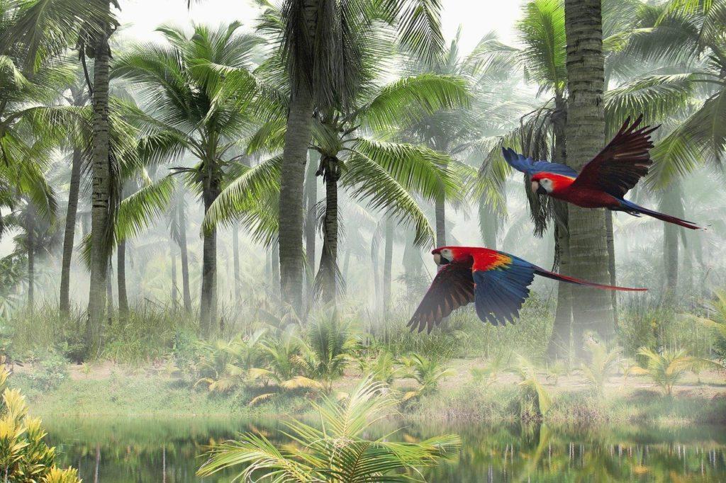 landscape, palms, parrots
